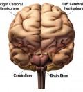 איור מוח גדול