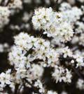 פרחים בלבן גדול