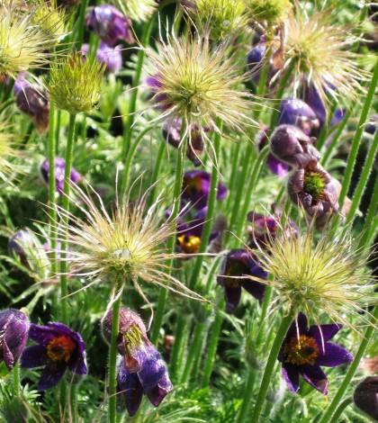 פרחים בסגול 2 גדול