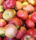 תפוחים בינוני