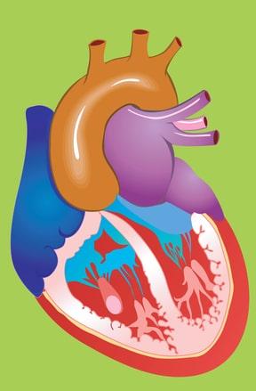 אבחון אי-ספיקת לב