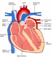 שמירה על קצב הלב